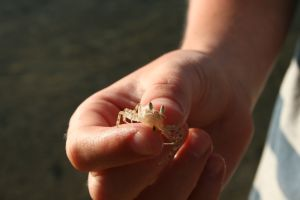 A tiny crab we discovered in Fiji